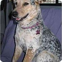 Adopt A Pet :: Kiwi - Phoenix, AZ