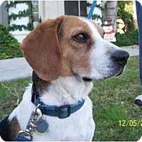 Adopt A Pet :: Sherman - Phoenix, AZ