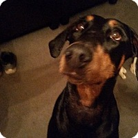 Adopt A Pet :: Liberty - Allegan, MI