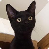 Adopt A Pet :: Buddy - Trevose, PA