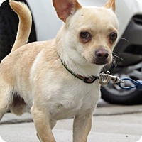 Adopt A Pet :: Buttons - Meridian, ID