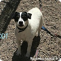 Adopt A Pet :: Buddy - Adopted Oct 2016 - Huntsville, ON