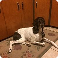 Adopt A Pet :: Juno - Park Falls, WI