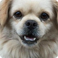 Adopt A Pet :: Henry - Conway, AR