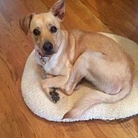 Adopt A Pet :: Zoey - Nashville, TN