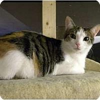 Adopt A Pet :: Tessa - Bartlett, IL