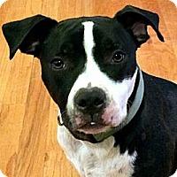 Adopt A Pet :: Roamey - Plainfield, CT