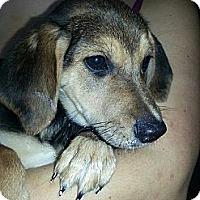 Adopt A Pet :: Matt - South Jersey, NJ