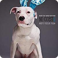 Adopt A Pet :: Taco - Louisville, KY