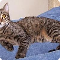 Adopt A Pet :: K-Ls1-Lalo - Colorado Springs, CO