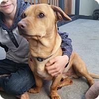 Adopt A Pet :: Ryder- fabulous low rider! - Temecula, CA