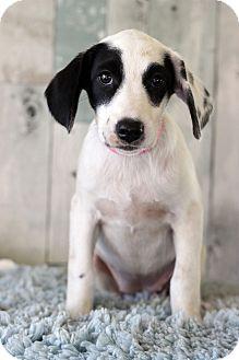 Hound (Unknown Type) Mix Puppy for adoption in Waldorf, Maryland - Tala
