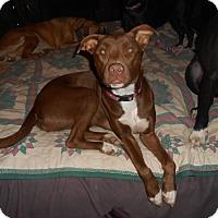 Adopt A Pet :: Coco - North Jackson, OH