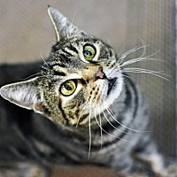 Adopt A Pet :: Nelly - Denver, CO