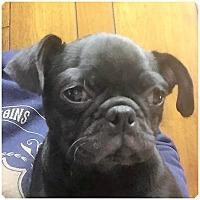 Adopt A Pet :: Rocky - Tavares, FL