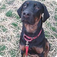 Adopt A Pet :: Rowena - Zp Litter - Livonia, MI