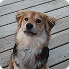 Adopt A Pet :: AJ