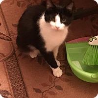 Adopt A Pet :: Ava - Dalton, GA