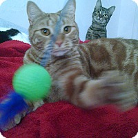 Adopt A Pet :: Meouch - Little Neck, NY