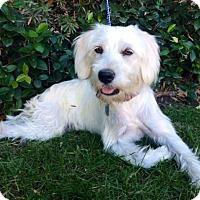 Adopt A Pet :: SASHA - Irvine, CA