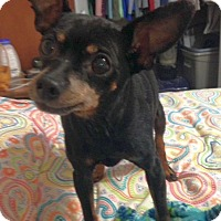 Adopt A Pet :: Poncho - Knoxville, TN