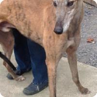 Adopt A Pet :: Deandre Daniels - Gerrardstown, WV