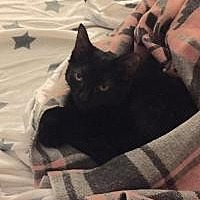 Adopt A Pet :: Trixie - Cleveland, OH
