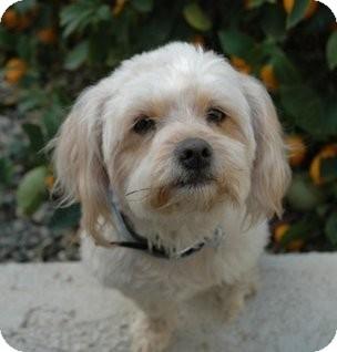 Shih Tzu/Poodle (Miniature) Mix Dog for adoption in Salt Lake City, Utah - JEFFREY