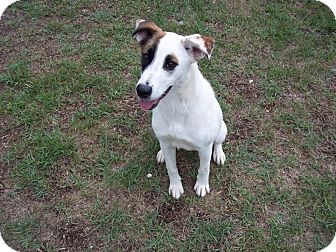 Border Collie Mix Dog for adoption in Tampa, Florida - Rainbow