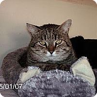 Adopt A Pet :: Scooter - NEWCASTLE, CA