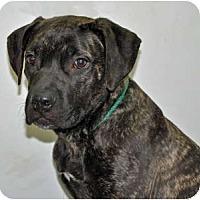Adopt A Pet :: Delilah - Port Washington, NY