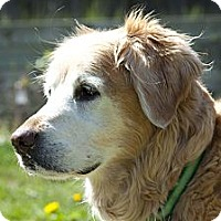 Adopt A Pet :: Muffin - Denver, CO
