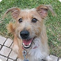 Adopt A Pet :: Olivia - Jacksonville, FL