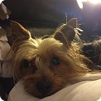 Adopt A Pet :: Happy - Ormond Beach, FL