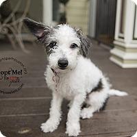 Adopt A Pet :: Rocky Road - Houston, TX