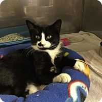 Adopt A Pet :: Nubby - Byron Center, MI
