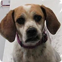 Adopt A Pet :: Billie - North Olmsted, OH