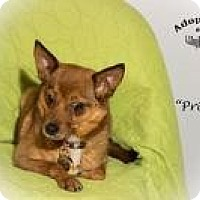 Adopt A Pet :: Princess - Shawnee Mission, KS