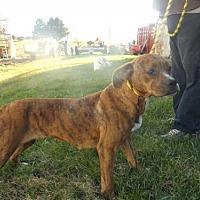 Adopt A Pet :: Tia - Zaleski, OH