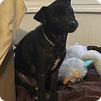 Adopt A Pet :: Lucy - Lodi, CA