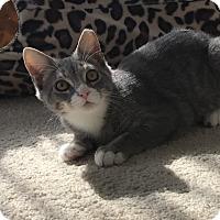 Adopt A Pet :: Huckleberry - Jackson, NJ