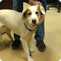 Adopt A Pet :: Charleston - Newberry, SC