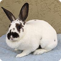 Adopt A Pet :: Joy - Bonita, CA