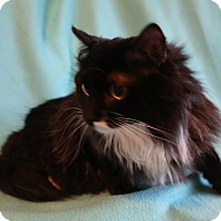 Adopt A Pet :: Kiki - Spring Valley, NY
