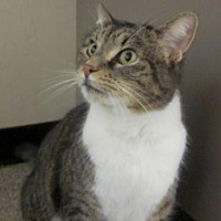 Adopt A Pet :: Sequoia - Springfield, OR