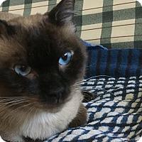 Adopt A Pet :: CHANGO - Brea, CA