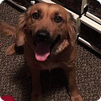 Adopt A Pet :: Gretchen - waterbury, CT