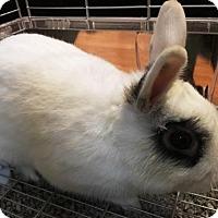 Adopt A Pet :: Rory - Vancouver, WA