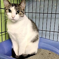 Adopt A Pet :: Iris - Milwaukee, WI