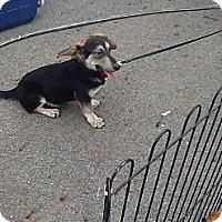 Adopt A Pet :: Shorty - Sardis, TN